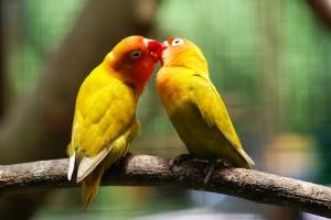 lovebird3