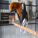 Manjaga Kesehatan Fisik dan Mental Burung Kicau