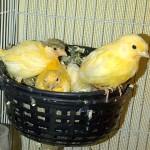 BERBAHAYA! Hati-hati Memilih Makanan Untuk Burung Kesayangan Anda!