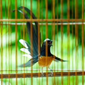 3 Protein Utama Agar Burung Jadi Juara
